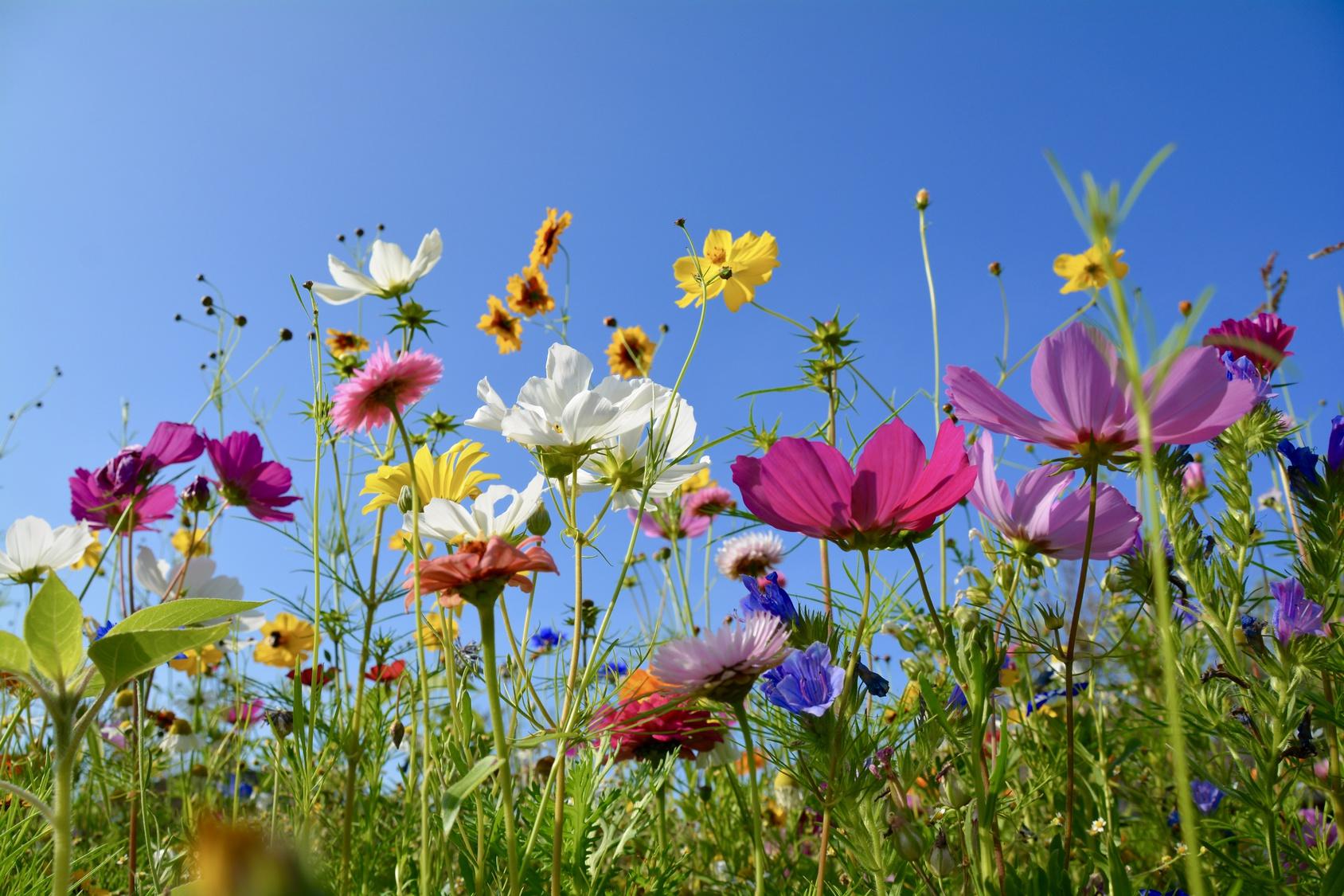 Blumen im Feld, Symbolbild für Kinderdorfmutter